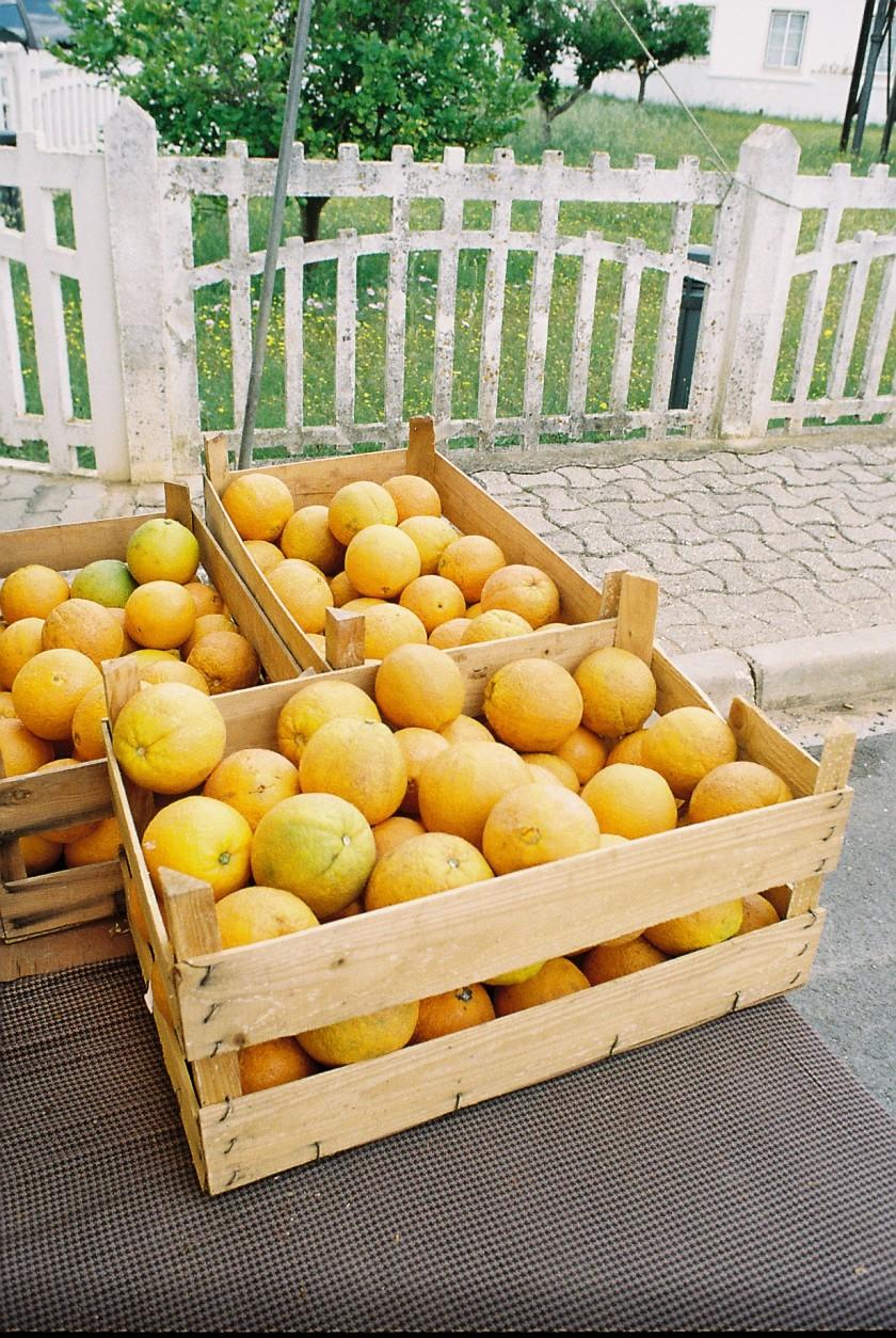 Portugese Oranges