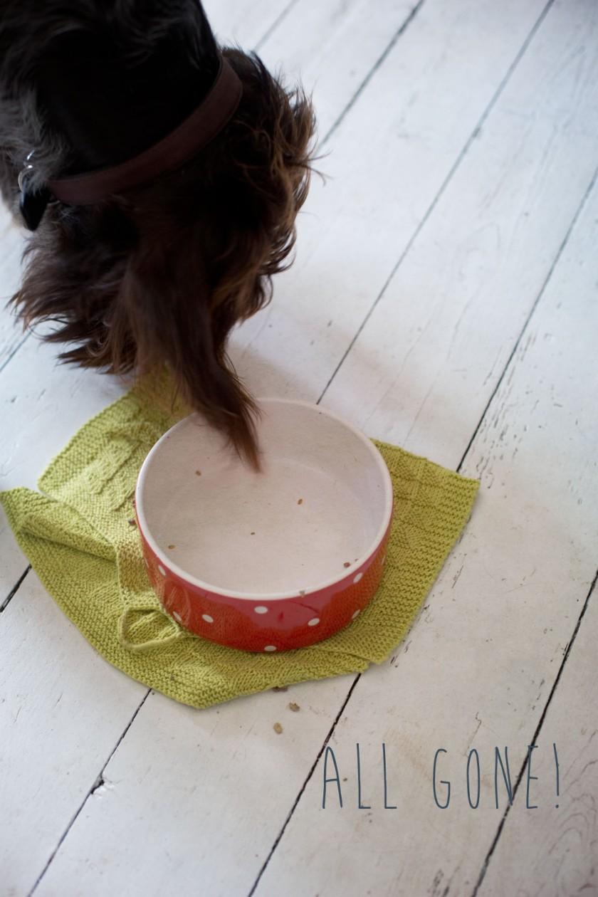 dog empty bowl