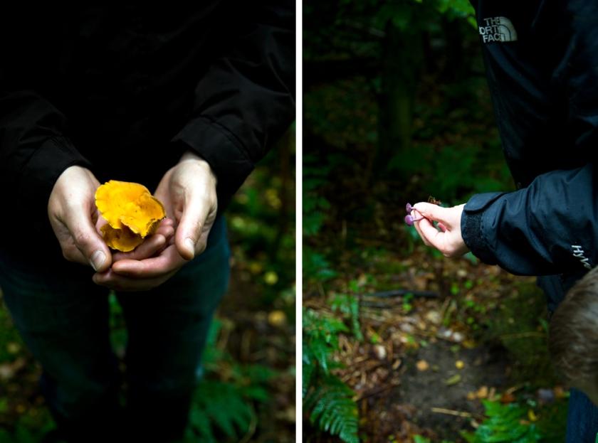 mushroom collage2