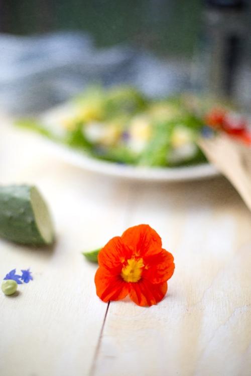 garden salad-5